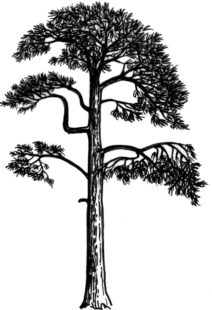 Priroda Rakoveckeho Udoli